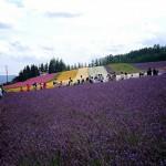 ファーム富田_ラベンダー畑と花畑